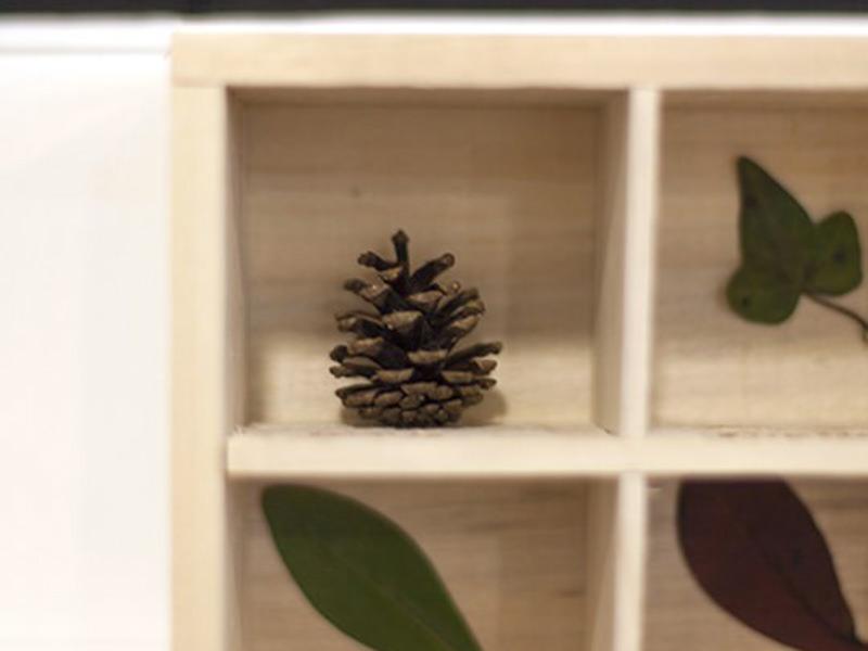 L'herbier en bois
