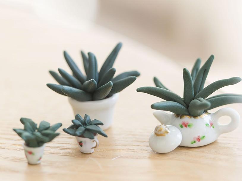 Les plantes miniatures