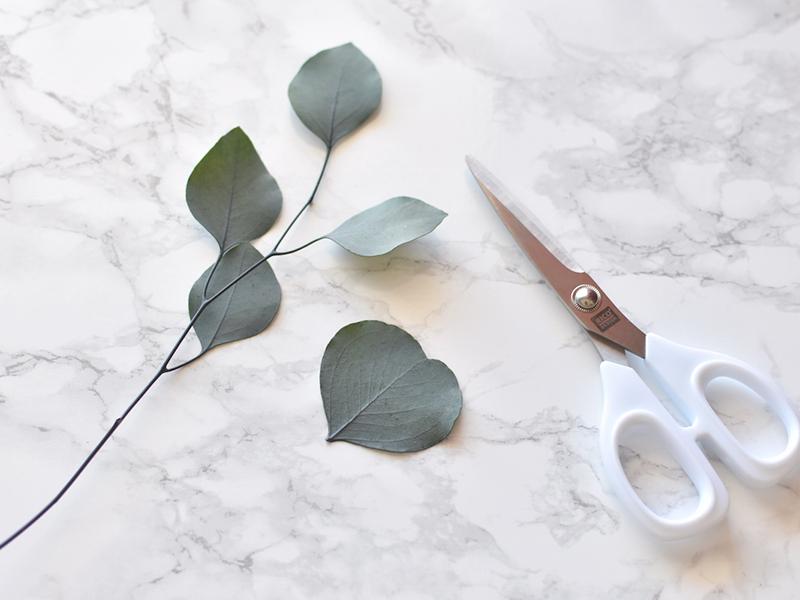 Choisissez une feuille d'eucalyptus et coupez-la de la branche.