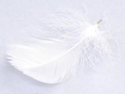 Plume blanche - fournitures loisirs créatifs et DIY