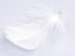 Weiße Feder