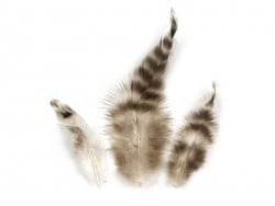 Package of decorative chinchilla feathers