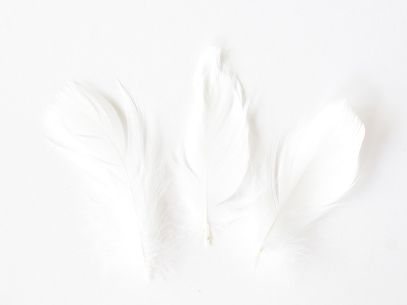 Pack of white decorative feathers