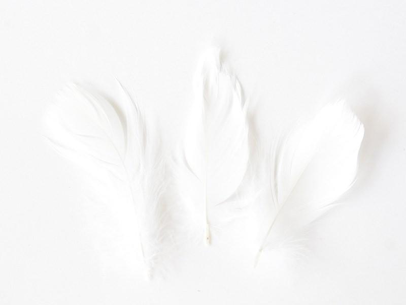 Acheter paquet de Plumes blanches décoratives - 1,29€ en ligne sur La Petite Epicerie - Loisirs créatifs