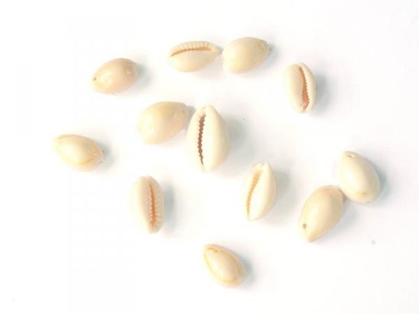 10 money cowry shell beads - 15 mm