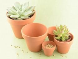 Flower pot - 10 cm