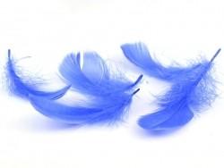Plume bleu électrique