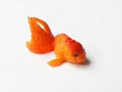 Fish - Size L