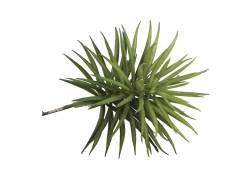 Fausse plante succulente Senecis Rayher - 1