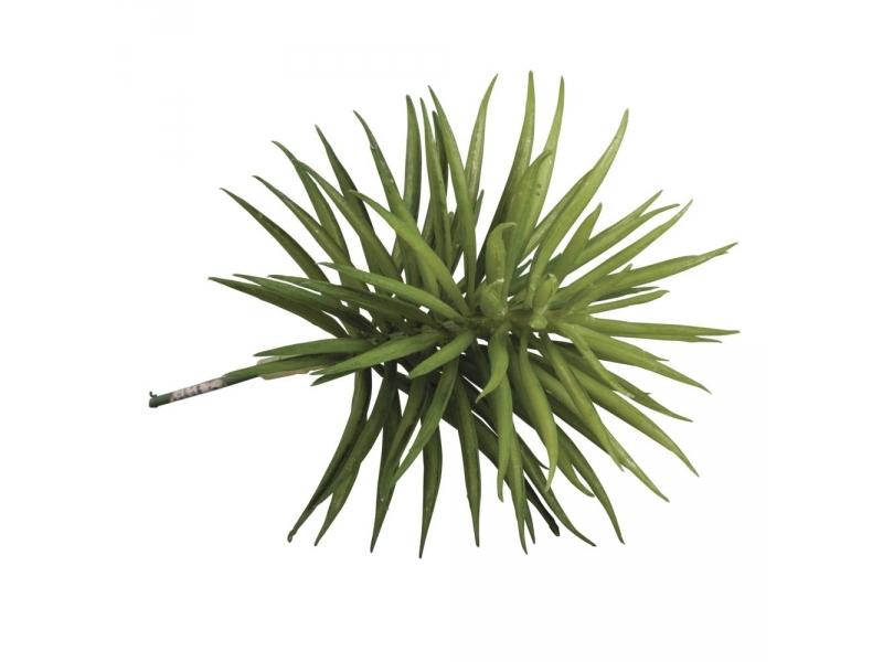 Acheter Plante succulente Senecis - plante artificielle - 3,60€ en ligne sur La Petite Epicerie - 100% Loisirs créatifs