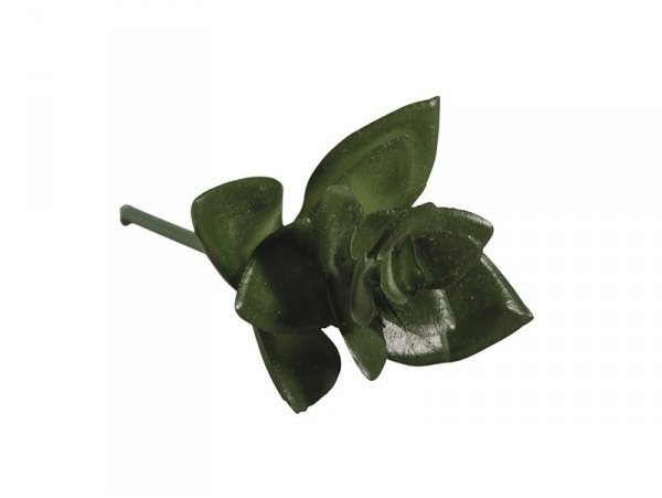Acheter Plante succulente Haworthia - plante artificielle - 1,90€ en ligne sur La Petite Epicerie - Loisirs créatifs