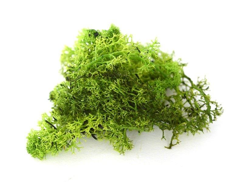 Acheter Mousse verte claire d'Islande - 2,35€ en ligne sur La Petite Epicerie - Loisirs créatifs