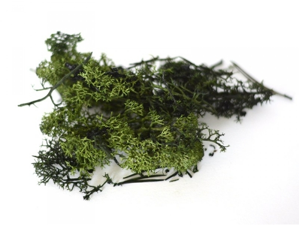 Acheter Mousse verte foncée d'Islande - 2,35€ en ligne sur La Petite Epicerie - 100% Loisirs créatifs