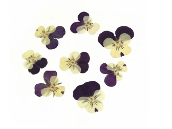 Acheter Planche de 12 pensées pressées - violet profond - 5,99€ en ligne sur La Petite Epicerie - Loisirs créatifs