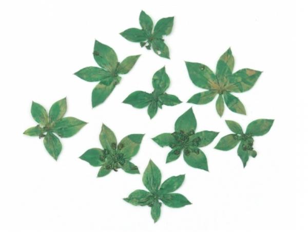 Acheter Planche de 10 petites fleurs pressées - vert - 4,09€ en ligne sur La Petite Epicerie - Loisirs créatifs