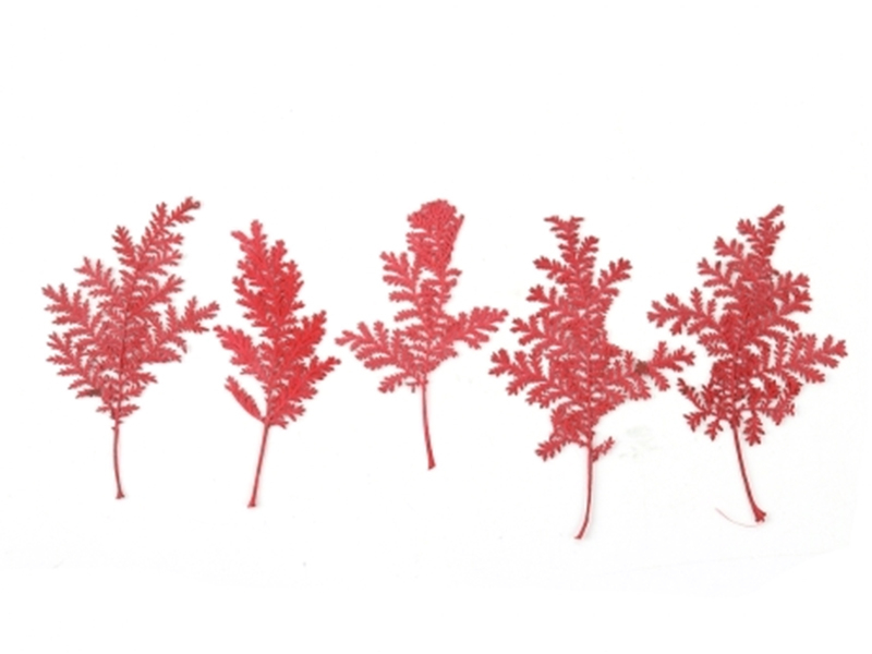 Acheter Planche de 10 feuilles pressées - rouge foncé - 3,79€ en ligne sur La Petite Epicerie - 100% Loisirs créatifs