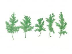 Planche de 10 feuilles...