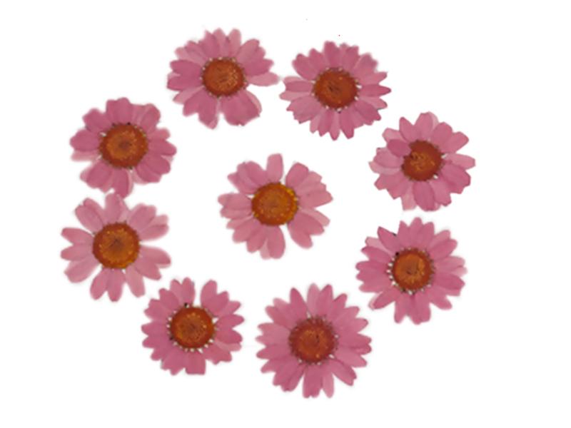 Acheter Planche de 12 chrysanthèmes pressés - vieux rose - 5,99€ en ligne sur La Petite Epicerie - Loisirs créatifs