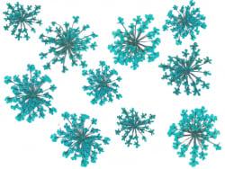 Acheter Planche de 12 fleurs pressées - bleu turquoise - 4,59€ en ligne sur La Petite Epicerie - Loisirs créatifs