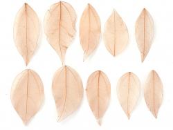 Acheter Lot de 5 feuilles pressées - marron clair - 0,89€ en ligne sur La Petite Epicerie - 100% Loisirs créatifs
