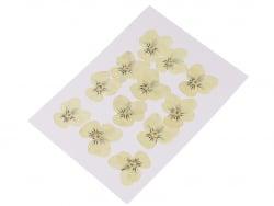 Acheter Planche de 12 pensées pressées - jaune clair - 5,99€ en ligne sur La Petite Epicerie - 100% Loisirs créatifs