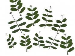 Planche de 12 feuilles...