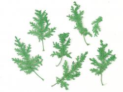 Acheter Planche de 10 feuilles pressées - vert - 3,79€ en ligne sur La Petite Epicerie - 100% Loisirs créatifs