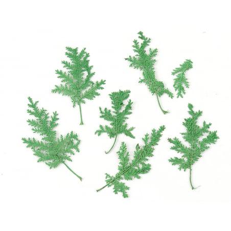 Acheter Planche de 10 feuilles pressées - vert - 3,79€ en ligne sur La Petite Epicerie - Loisirs créatifs