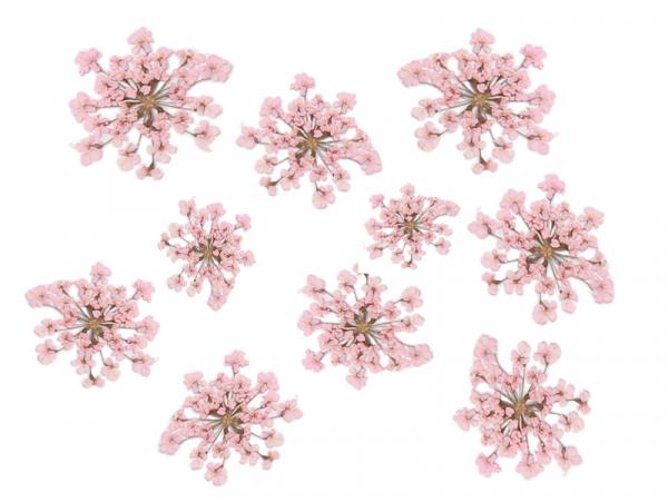 Acheter Planche de 12 fleurs pressées - rose - 4,59€ en ligne sur La Petite Epicerie - Loisirs créatifs