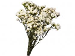 Acheter Brin de Statice Sinuata blanc - fleur séchée - 1,99€ en ligne sur La Petite Epicerie - 100% Loisirs créatifs