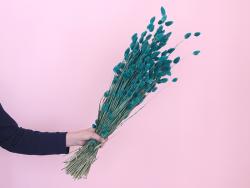 Acheter Brin de Phalaris vert pétrole - fleur séchée - 0,29€ en ligne sur La Petite Epicerie - Loisirs créatifs
