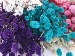 Acheter Brin de Phalaris lavande - fleur séchée - 0,29€ en ligne sur La Petite Epicerie - 100% Loisirs créatifs