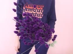 Acheter Brin de Phalaris lavande - fleur séchée - 0,29€ en ligne sur La Petite Epicerie - Loisirs créatifs