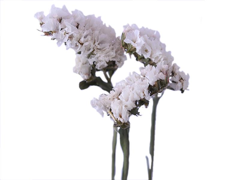 Acheter Brin de Statice Sinuata blanc - fleur séchée - 1,99€ en ligne sur La Petite Epicerie - Loisirs créatifs