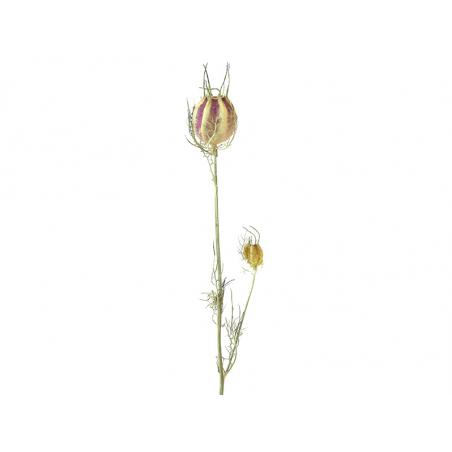 Acheter Brin de Nigella - fleur séchée - 0,49€ en ligne sur La Petite Epicerie - 100% Loisirs créatifs