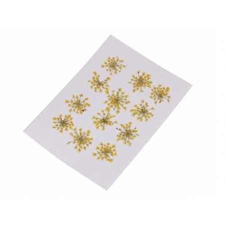 Acheter Planche de 12 fleurs pressées - jaune - 4,59€ en ligne sur La Petite Epicerie - Loisirs créatifs