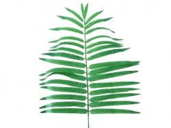 Acheter Fausse feuille de Palmier - 80 cm - 7,99€ en ligne sur La Petite Epicerie - 100% Loisirs créatifs