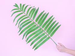 Acheter Fausse feuille de Palmier - 80 cm - 7,99€ en ligne sur La Petite Epicerie - Loisirs créatifs