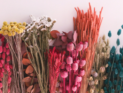 Acheter Brin de Nigella Orientalis - fleur séchée - 0,49€ en ligne sur La Petite Epicerie - 100% Loisirs créatifs
