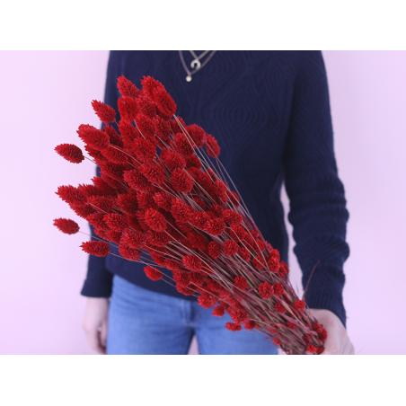 Acheter Brin de Phalaris rouge - fleur séchée - 0,29€ en ligne sur La Petite Epicerie - 100% Loisirs créatifs