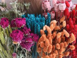 Acheter Brin de Phalaris orange - fleur séchée - 0,29€ en ligne sur La Petite Epicerie - Loisirs créatifs