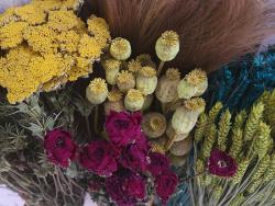 Acheter Brin de Pavot jaune - fleur séchée - 0,89€ en ligne sur La Petite Epicerie - Loisirs créatifs