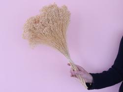 Acheter Brin de Broom Bloom blanchi - fleur séchée - 0,89€ en ligne sur La Petite Epicerie - Loisirs créatifs