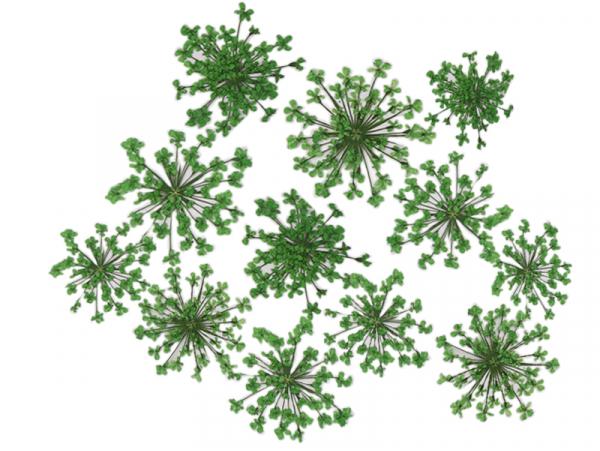 Acheter Planche de 12 fleurs pressées - vert - 4,59€ en ligne sur La Petite Epicerie - Loisirs créatifs