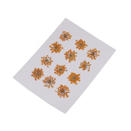 Acheter Planche de 12 fleurs pressées - orange - 4,59€ en ligne sur La Petite Epicerie - Loisirs créatifs