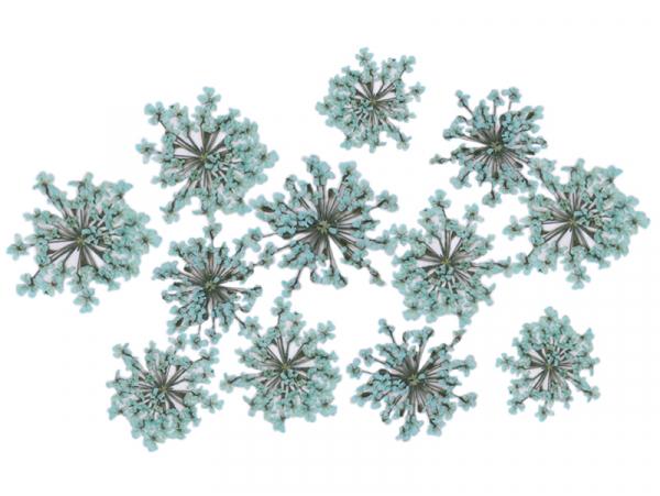 Acheter Planche de 12 fleurs pressées - vert menthe - 4,59€ en ligne sur La Petite Epicerie - Loisirs créatifs