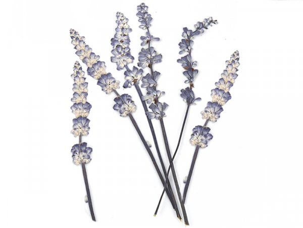 Acheter Planche de 8 brins de lavande - violet - 6,99€ en ligne sur La Petite Epicerie - Loisirs créatifs
