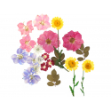 Planche de 20 fleurs pressées - multicolore
