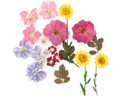 Acheter Planche de 20 fleurs pressées - multicolore - 7,99€ en ligne sur La Petite Epicerie - 100% Loisirs créatifs