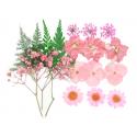 Planche de 20 fleurs pressées - mixte rose